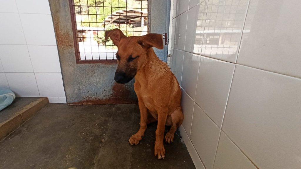 Bildertagebuch - DUMBO, noch kleiner Hundemann mit noch großen Ohren... RESERVIERT 39051939qe