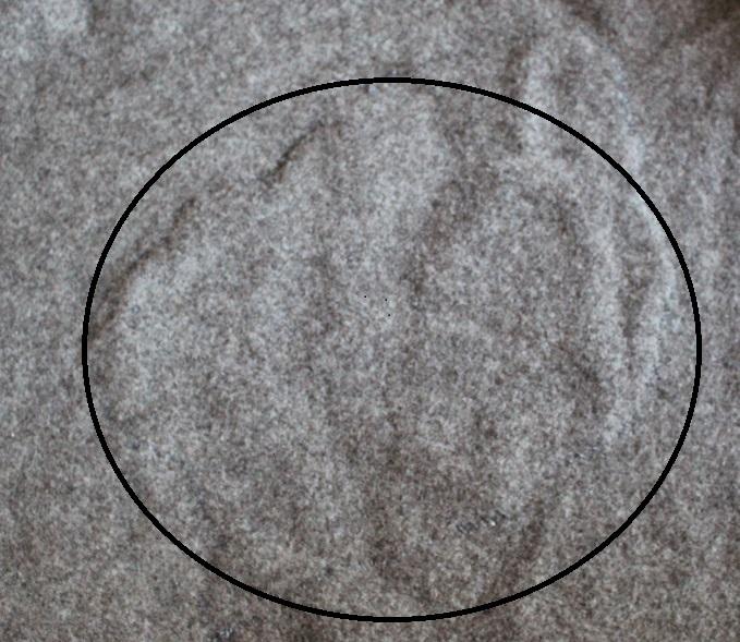 Klicke auf das Bild um es in Orginal-Größe zusehen.