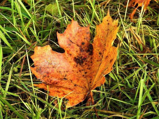 Gedanken über den Herbst 39737772ky