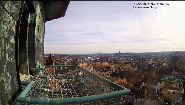 Nürnberg. Lebensraum Burg/ Sinwellturm - Pagina 4 40578632nl