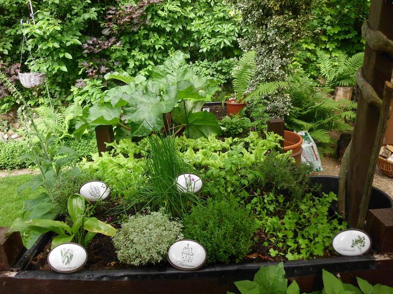 Geliebte Gemüse für Halbschatten - Mein schöner Garten Forum @ON_99