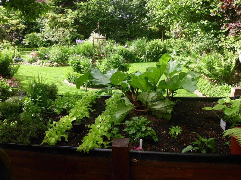 Außergewöhnlich Gemüse für Halbschatten - Mein schöner Garten Forum @JR_29